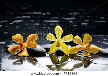 still life with  three orange flower with water drops