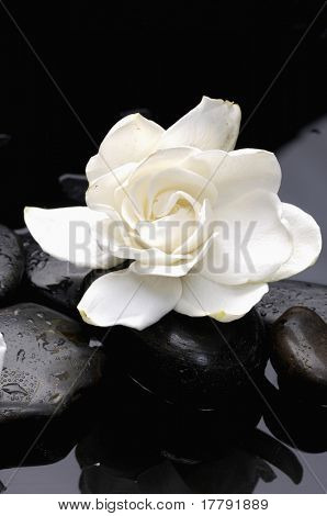 macro of Gardenia flowers on pebble