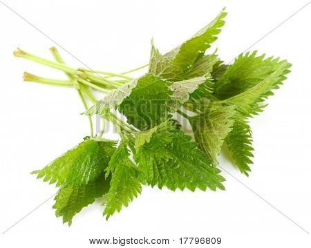 Stinging nettle (Urtica dioica) is rich in vitamins A, C, iron, potassium, manganese, and calcium. Herb can be used to treat arthritis, anemia, hay fever, kidney problems, and pain.