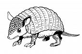 picture of armadillo  - Armadillo isolated on white background - JPG