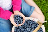 Close-up Of Childs Hands Holding Fresh Blueberries Picked At Blueberry Farm poster