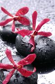 pic of flower arrangement  - Spa still life with water drops - JPG