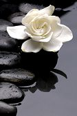 picture of gardenia  - macro of Gardenia flowers on pebble - JPG