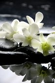 picture of white flower  - Zen stones and branch white orchids with reflection - JPG