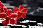 still life with branch red orchid on pebbles