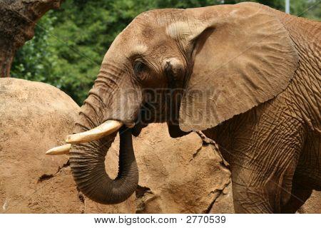Elephant 3/4 View