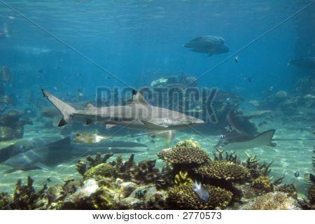 Sharkk