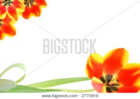 Tulip Ornameted Card