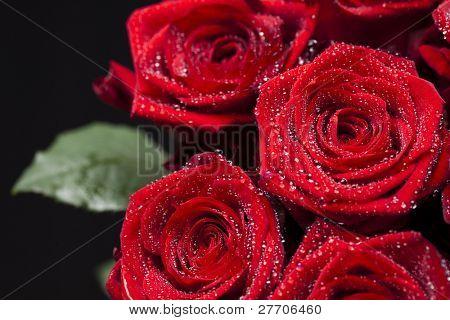 Beautiful romantic flower