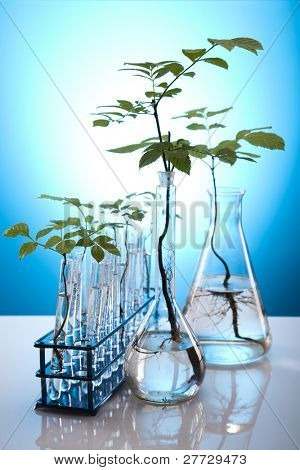 Chemical laboratory glassware equipment, ecology