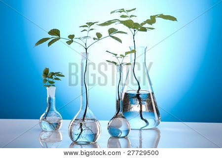 Chemistry equipment, plants laboratory glassware