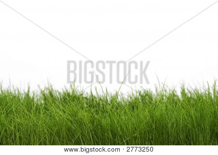 Dark Green Grass