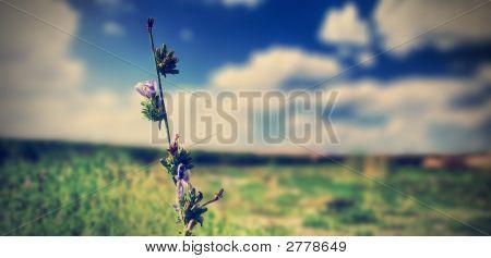 Uma história de violetas