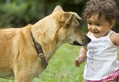 stock photo of baby dog  - Infant and family dog - JPG