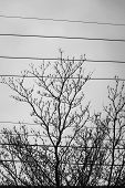 I Saw A Lush Tree Between Several Cables And Grew Quietly. The Cold Winter, The Tough Vitality, Is M poster