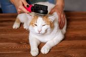 Lying Cute White-red Happy Cat And A Comb Full Of Pet Hair. Combing The Pet Cat. The Concept Of Pet  poster