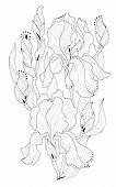 Black And White Page For Coloring. Fantasy Drawing Of Beautiful Irises. Pattern For Print And Embroi poster