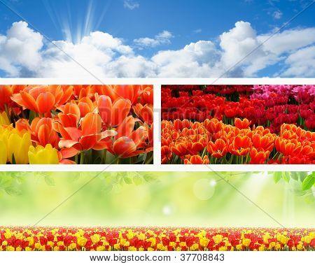 Landschaft Frühling Natur-Banner