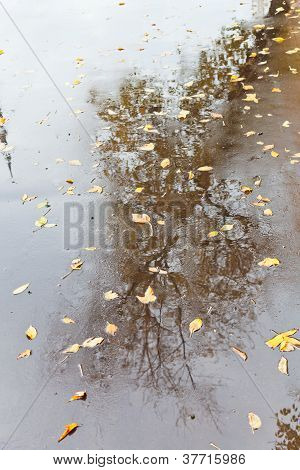 Yellow Autumn Leaves And Naked Tree Reflection