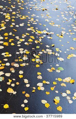 Many Falled Leaves On Wet Asphalt Road