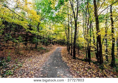 Autumn Path In The Forest.