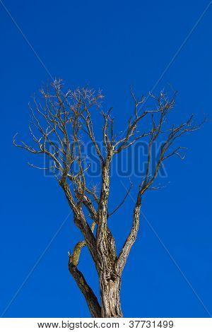 Her tree against blue sky