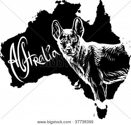 Dingo As Australian Symbol