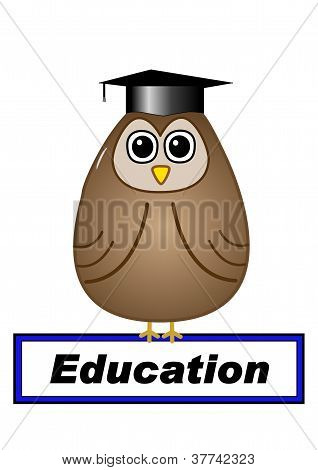 Education concept with owl