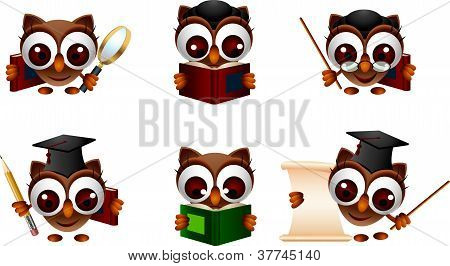 various illustration of owl
