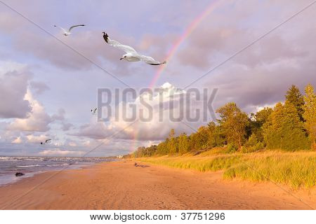Seagulls Flying Next To A Rainbow