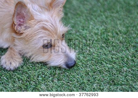 Dog Lying In The Grass