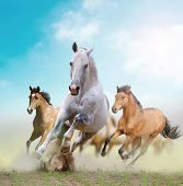 stock photo of fillies  - horses in a dust in the sunset - JPG