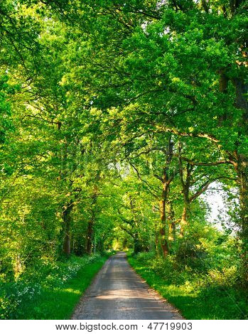 Scenic country road through oak trees in England