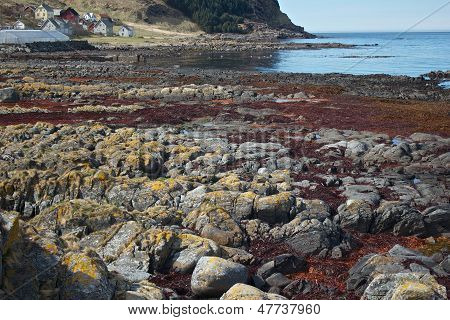 Rocks with red weed