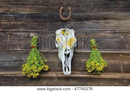 Tutsan Bunches And Horse Cranium On Old Wooden Wall