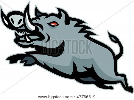 Wild Pig Boar Jumping Isolated