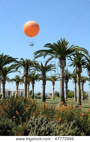 IRVINE; CA - June 13: Tethered Balloon rises above the Great Park Palm Court in Irvine, CA on June 13, 2013. The controversial Great Park will be the largest urban park since Central Park in NY.
