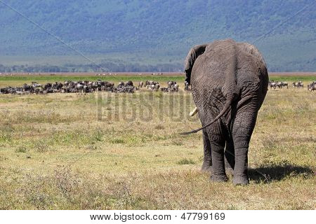 African Elephant And Herd Of Wildebeest