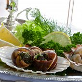 stock photo of escargot  - Gourmet - JPG