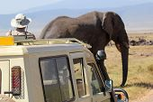 stock photo of  jeep  - An old african elephant  - JPG