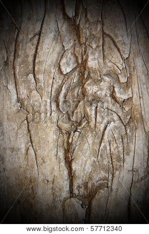 Very Old Poplar Texture