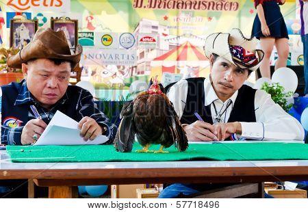 Serama Contest In Thailand.