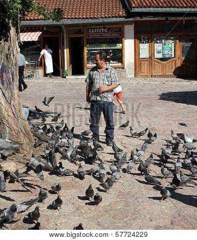 SARAJEVO, BiH, CIRCA 2012 - Pigeons feeding on central square circa 2012 in Sarajevo, BiH