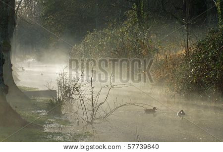 Mist And Sunshine