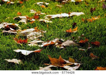Fallen Leaves, Green Grass