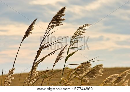 Prairie grass on a dry terrain against dark sky and rainy clouds