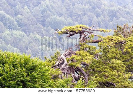 Mountain Forest from Mount Olympus