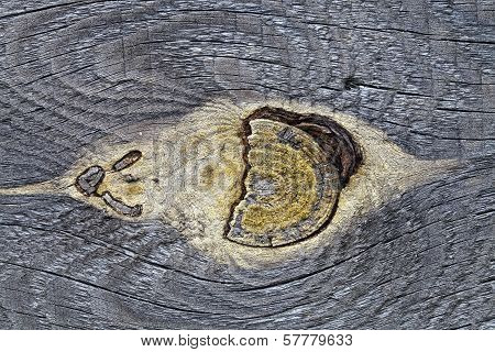 Mote In The Old Pine Board