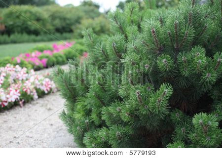 Bushes plant