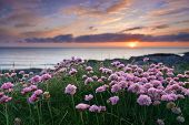 Pink Flowers By The Sea At Sunset